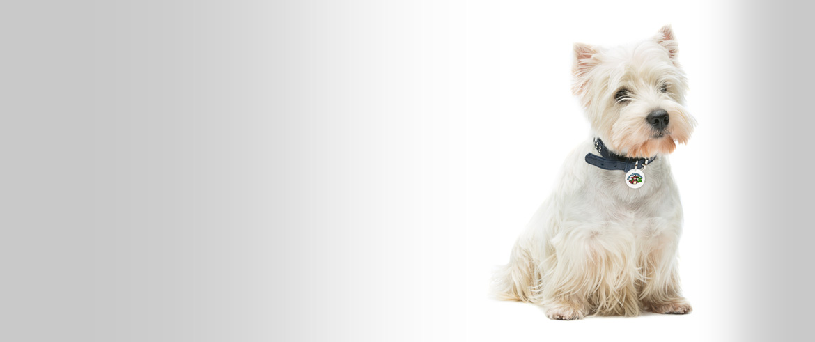Dundrum Dog Grooming